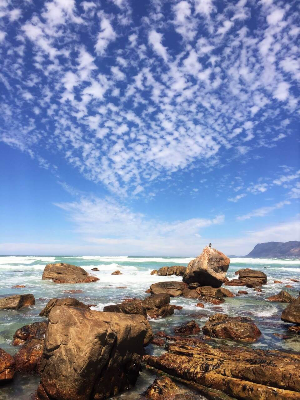 Ten of the best places to see animals in cape town and for What to see in cape town