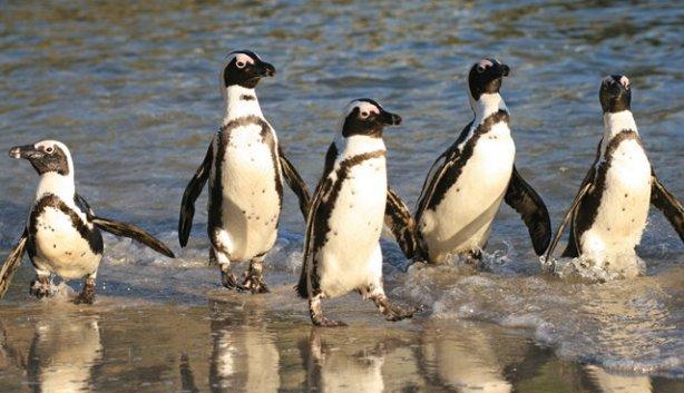 Pittsburgh Penguins Parking - Find Reserved Parking Near ...
